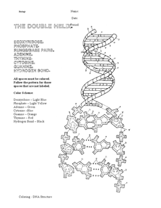 The Double Helix Worksheet