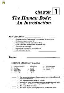 The Human Body: An Introduction Worksheet
