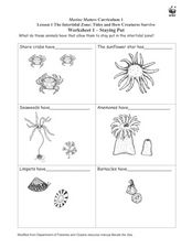 The Intertidal Zone: Tides and How Creatures Survive Worksheet