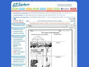 The Layers of the Rainforest Worksheet