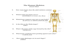The Leg Bone is Connected To The.... (a Look At the Skeletal System) Lesson Plan