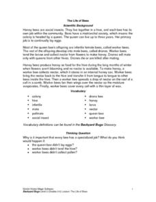 The Life Of Bees Lesson Plan