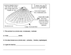 The Limpet Worksheet