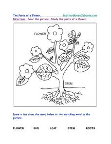 The Parts of a Flower Worksheet