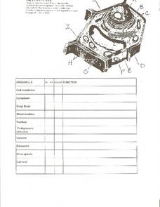 The Plant Cell Worksheet
