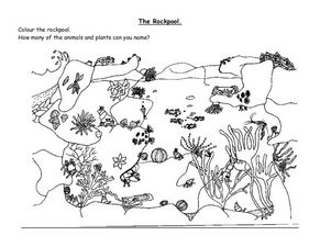 rockpool creatures coloring pages | The Rockpool 4th - 5th Grade Worksheet | Lesson Planet
