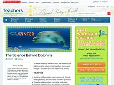 The Science Behind Dolphins Lesson Plan