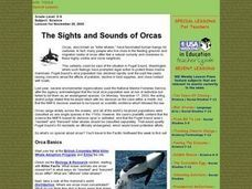 The Sights and Sounds of Orcas Lesson Plan