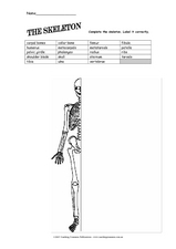 The Skeleton Worksheet