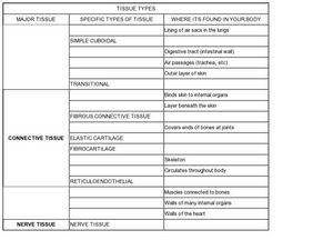 9th grade biology research paper topics