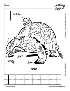 Tortoise Count and Write Worksheet