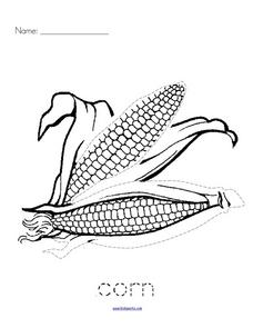 Trace and Color: Corn Worksheet