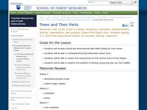 Trees and Their Parts Lesson Plan