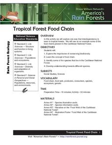 Tropical Forest Food Chain Lesson Plan