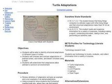 Turtle Adaptations Lesson Plan