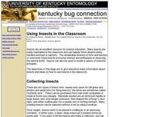Using Insects in the Classroom Lesson Plan