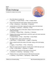 Whale Challenge Worksheet