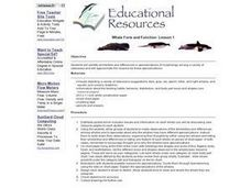Whale Form and Function Lesson Plan