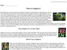 What are Epiphytes? Worksheet