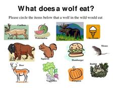 What Does a Wolf Eat? Worksheet