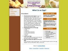 What Is an Egg? Lesson Plan