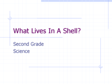 What Lives In A Shell? Lesson Plan