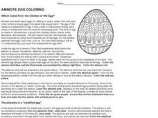 Which Came First, the Chicken or the Egg? Worksheet