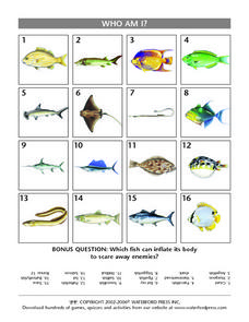 Who Am I?  Fish Identification Lesson Plan