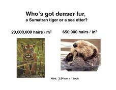 Who Has Denser Fur? Worksheet
