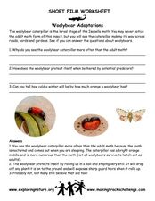 Woolybear Adaptations Worksheet