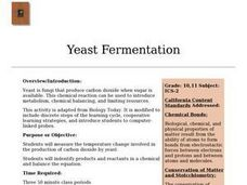 Yeast Fermentation Lesson Plan