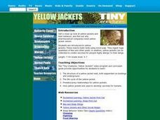 Yellow Jackets Lesson Plan
