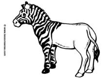 Zebra With Half -striped Body Worksheet