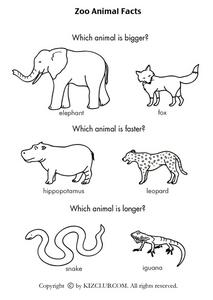 math worksheet : zoo animal facts kindergarten  1st grade worksheet  lesson pla  : Kindergarten Animal Worksheets
