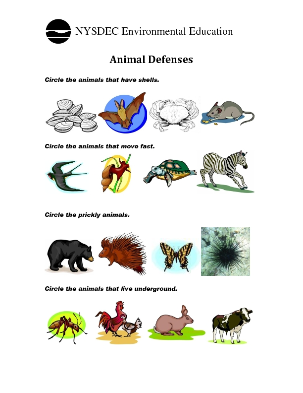 Second Grade Animals Lessons Tes Teach. Worksheets On Camouflage Animals For Kids Teachers. Kindergarten. Where Animals Live Worksheets For Kindergarten At Clickcart.co