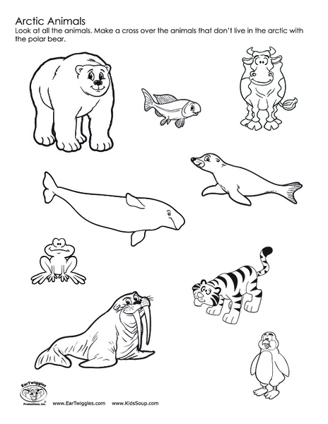 Land animals worksheet for kindergarten classifying for Polar animal coloring pages