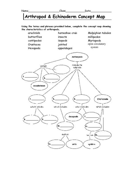 Arthropod and Echinoderm Concept Map 6th - 9th Grade Worksheet ...