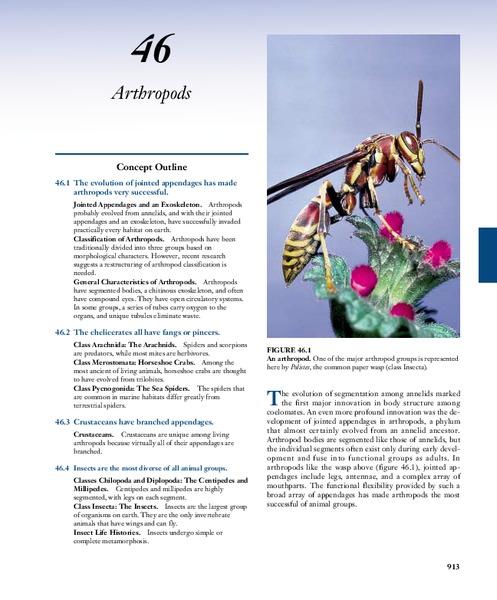 Gallery For u0026gt; Blank Cladogram Worksheet