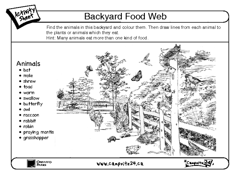 Food web worksheets for middle school