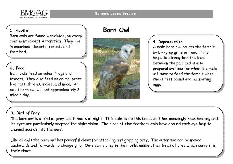 Owl Worksheets on Kindergarten Worksheets Snowy Owl