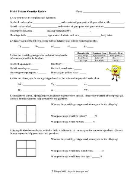 Printables Genetics Worksheet bikini bottom genetics review 9th 12th grade worksheet lesson planet