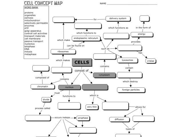 Printables The Cell Worksheet cell concept map 9th 12th grade worksheet lesson planet