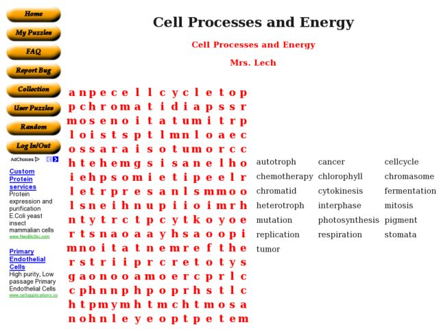 Cell Processes and Energy 9th 10th Grade Worksheet – Cell Processes Worksheet