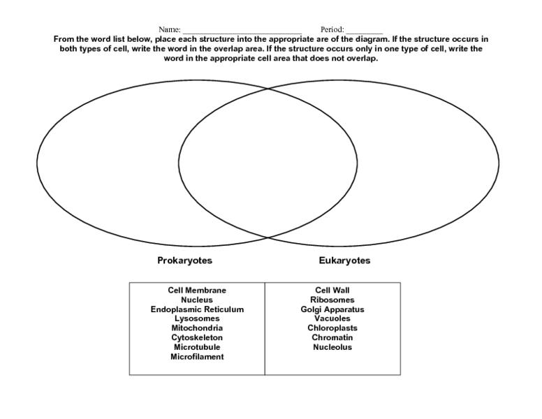 Unlabeled Prokaryotic Vs Eukaryotic Cells Venn Diagram Diy