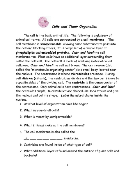 Worksheets Cell Organelles And Their Functions Worksheet Answers cells and their organelles worksheet pichaglobal 6th 12th grade lesson planet