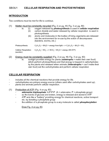 Printables Photosynthesis Worksheet Answers cellular respiration and photosynthesis 9th 11th grade worksheet lesson planet
