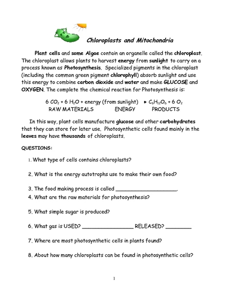 Chloroplast And Mitochondria Worksheet Answers - Education Worksheets