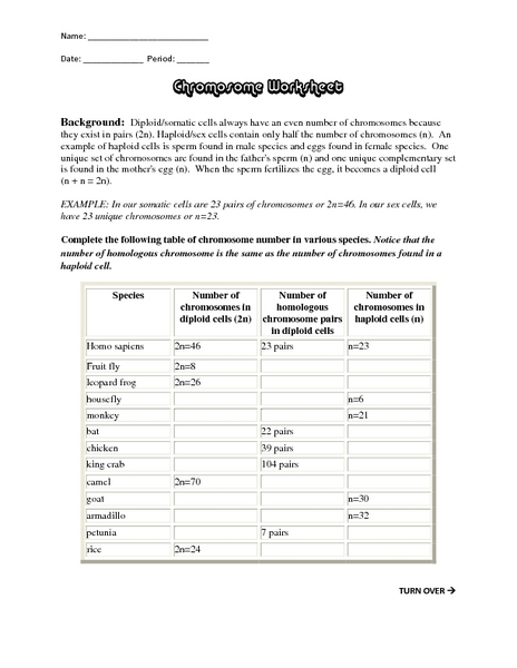 Chromosome Worksheet 9th - Higher Ed Worksheet | Lesson Planet