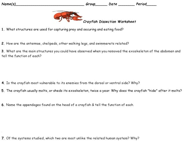 Crayfish anatomy worksheet