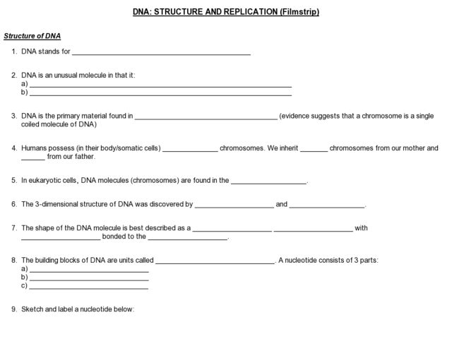 Dna Structure And Replication Worksheet Oaklandeffect